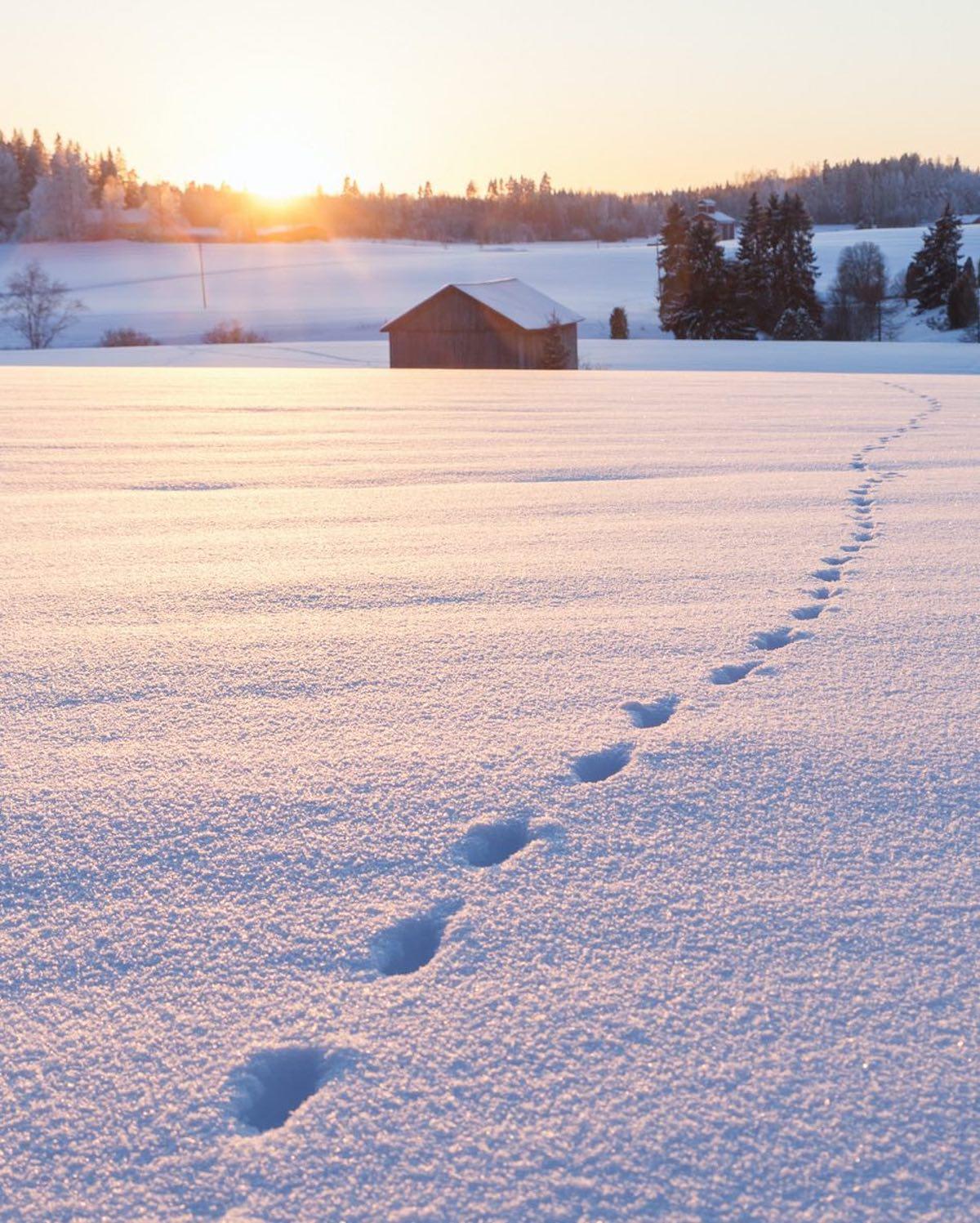 NORDIC-way-of-life-snowy-path-nordic-wisdom1